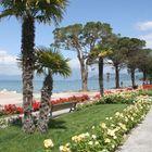 Rosen und Palmen