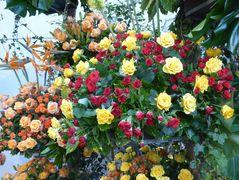 Rosen vieler Arten und Strelizien