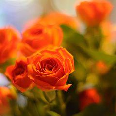 Rosen würde ich...