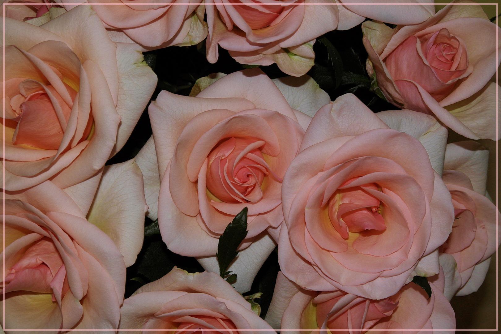 Rosen zu meinem Geburtstag