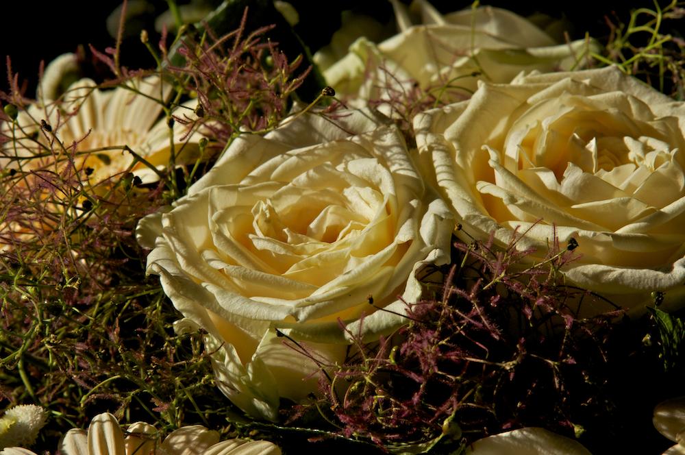 Rosen zu Pfingsten müssen keine Pfingstrosen sein, oder?
