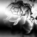 Rosenansicht