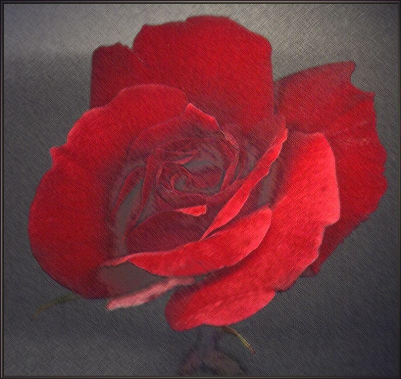 rosenart