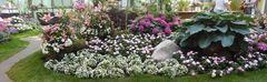 Rosenausstellung im Palmengarten, langes Foto