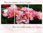 Rosenbeet (berichtigt)