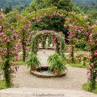 Rosenbögen im Rosenneuheitengarten Beutig Baden-Baden