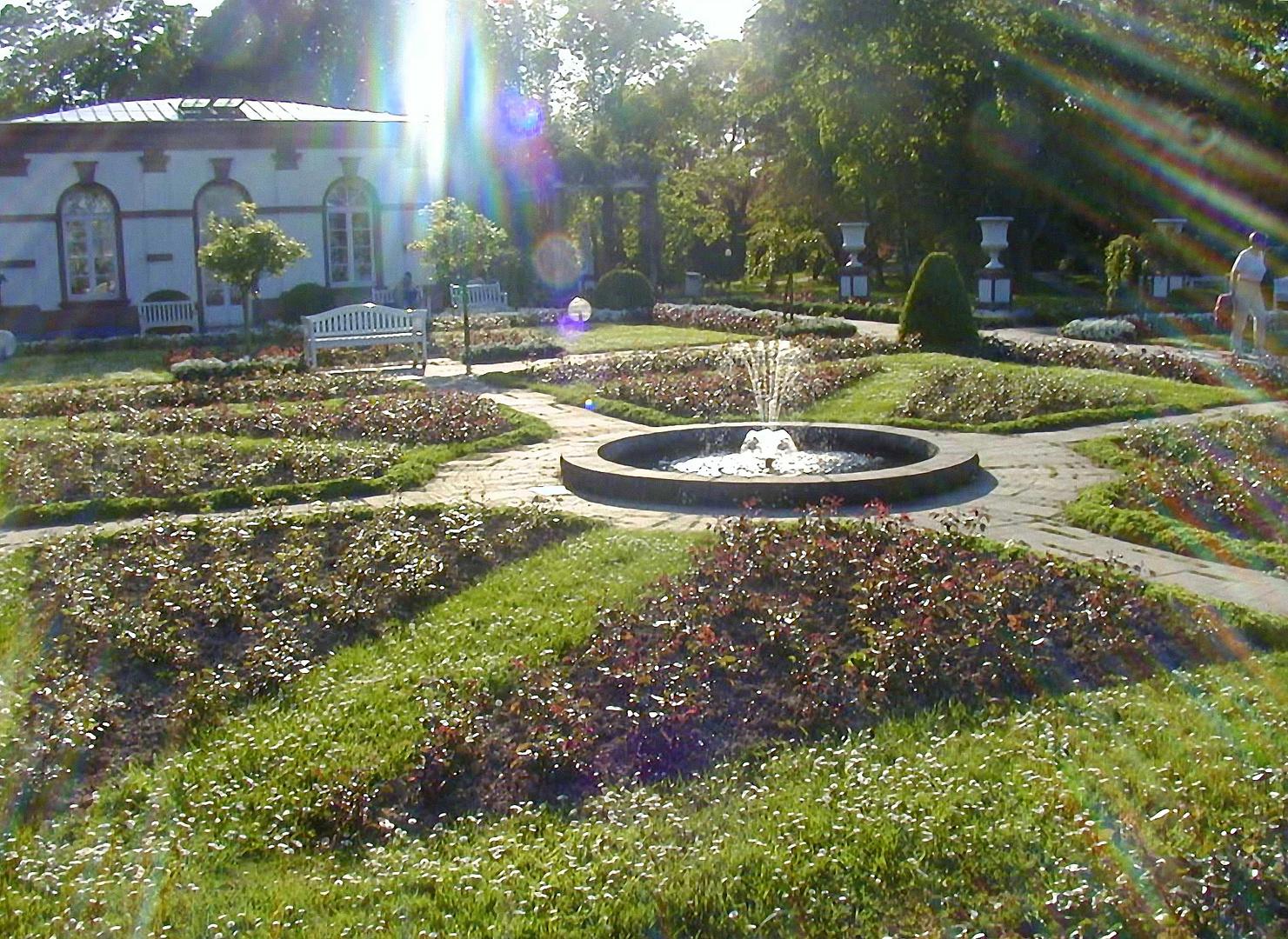 Rosengarten mit Sonnenstrahlen