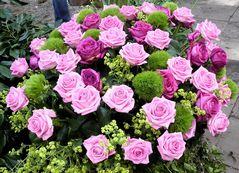 Rosengesteck mit rosa,rot und grün