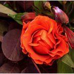 Rosengruß....