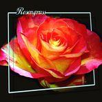 Rosengruß...