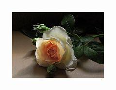 Rosenlicht