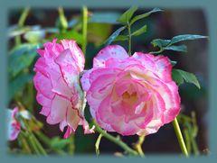 Rosenpaar ...
