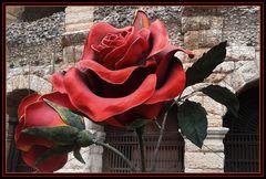 "Rose..per l'""amabile Rosina""....."