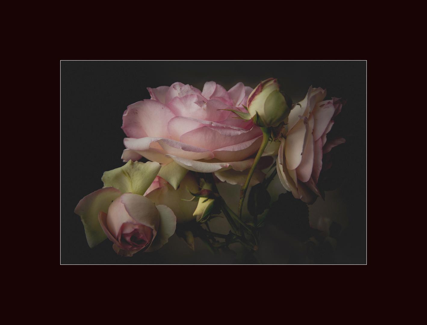..rose...rosa...