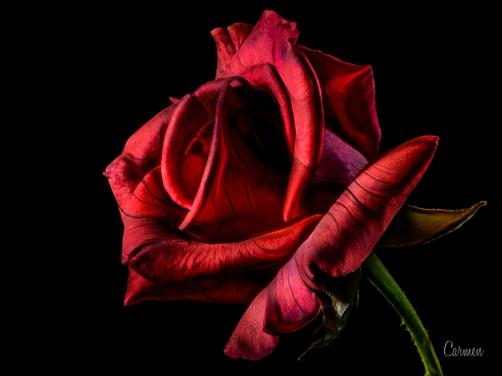 Roses for ever
