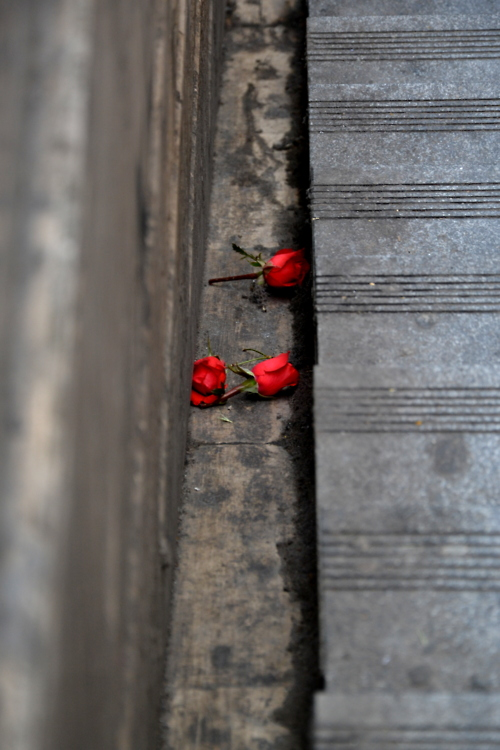 Roses in the gutter