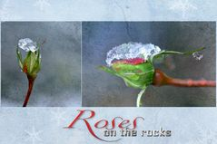 Roses on the rocks