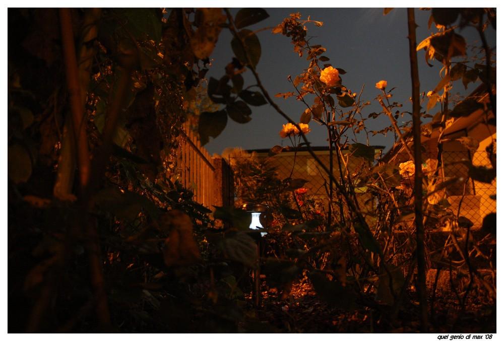 roseto notturno