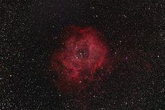Rosettennebel ( Rose) NGC 2237 im Sternbild Einhorn