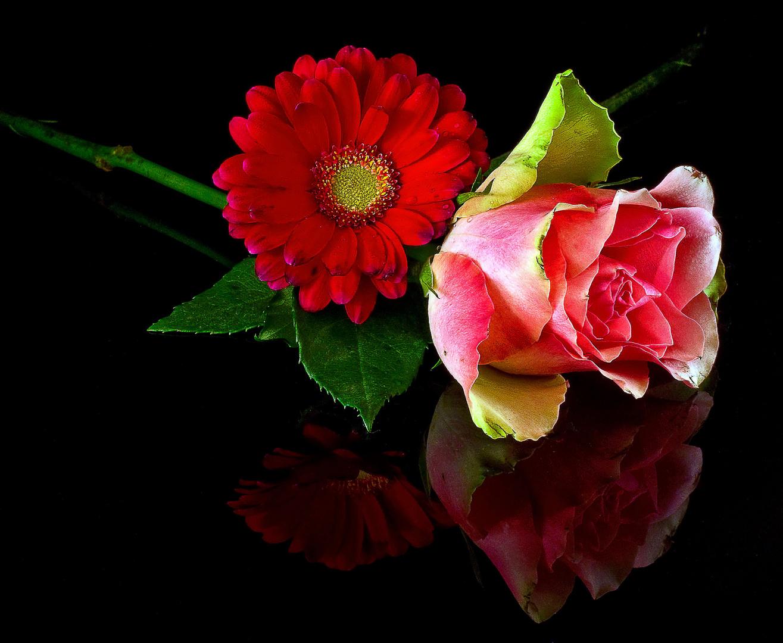 Rose_und_Gerbera