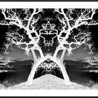 Roshar tree