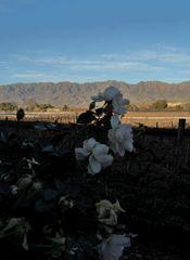 rosi mountains