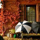 rosso autunno