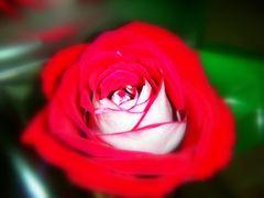 Rosso e rosa
