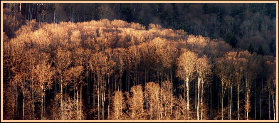 Rostiger Wald