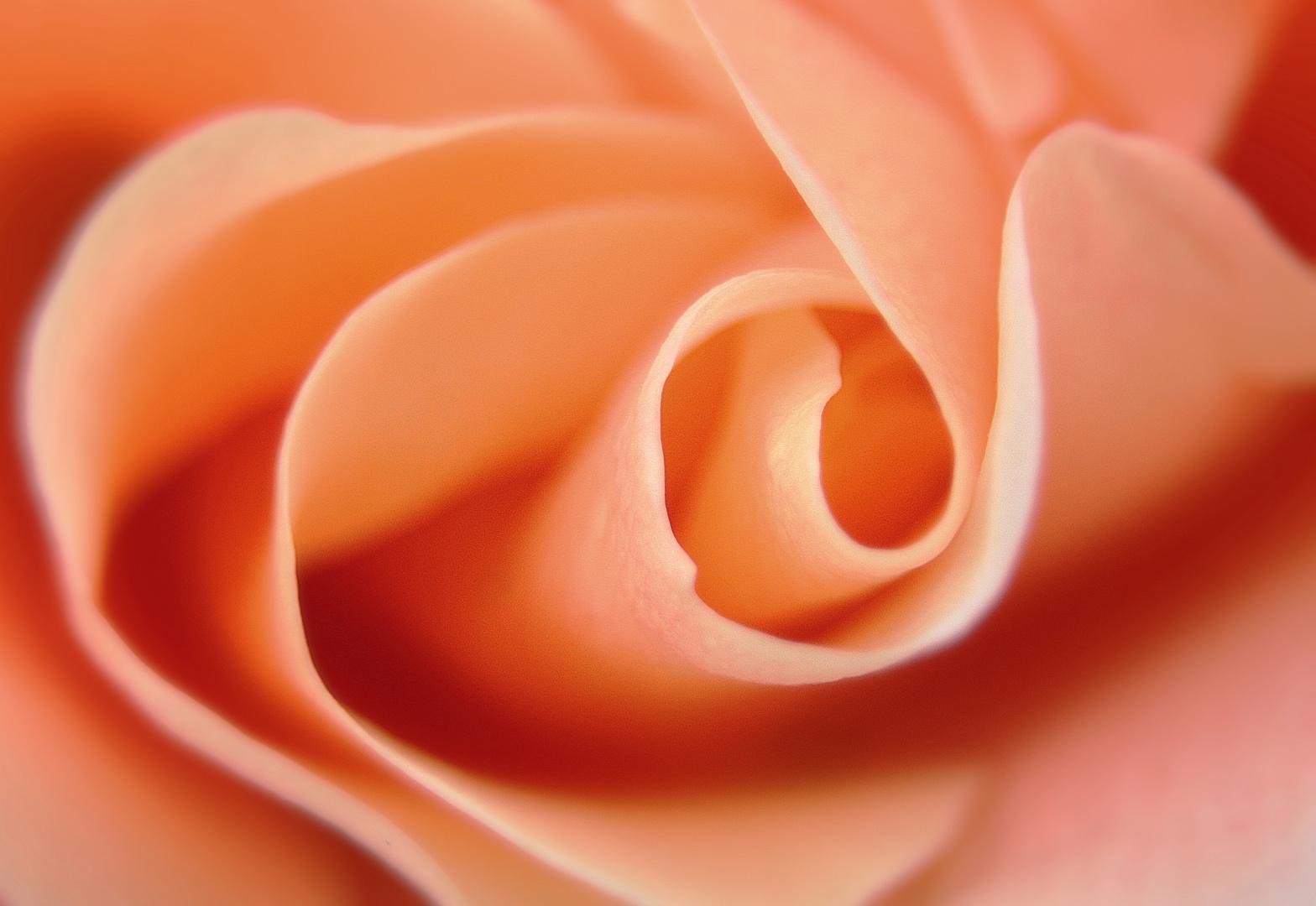 Rosy Dreams