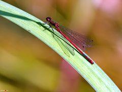 Rot auf Grün
