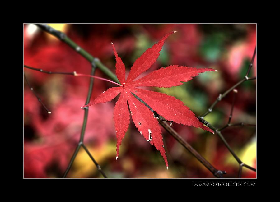 Rot auf Herbst