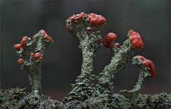 Rot-Grün ---