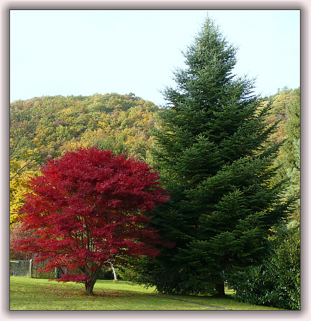 Rot / Grün
