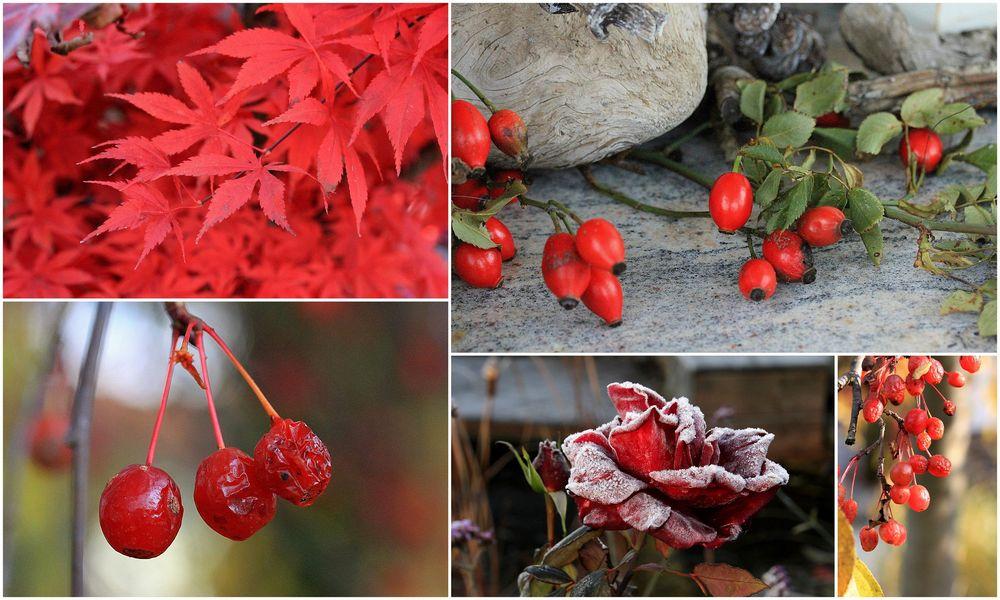 Rot im Garten
