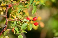 Rot im Grünen