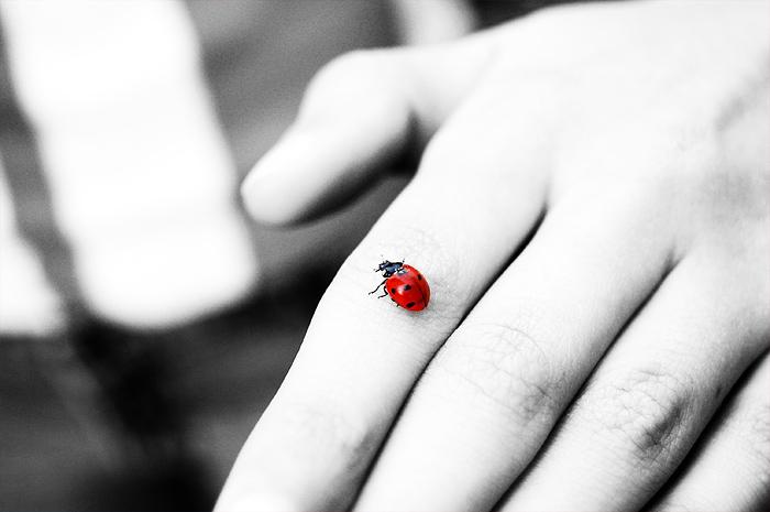 Rot ist der Marienkäfer