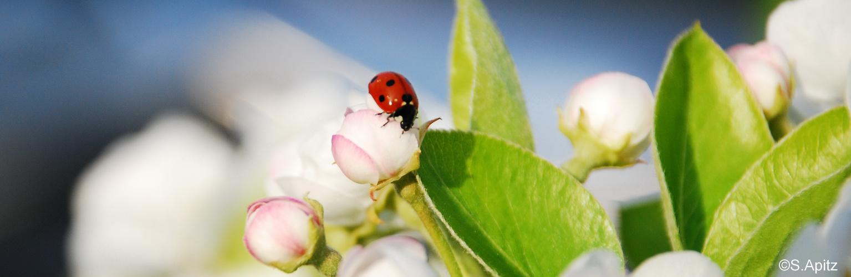 rot mit schwarzen punkten foto bild tiere wildlife insekten bilder auf fotocommunity. Black Bedroom Furniture Sets. Home Design Ideas