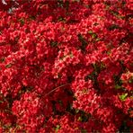 ROT RED ROUGE ROSSO ROJO