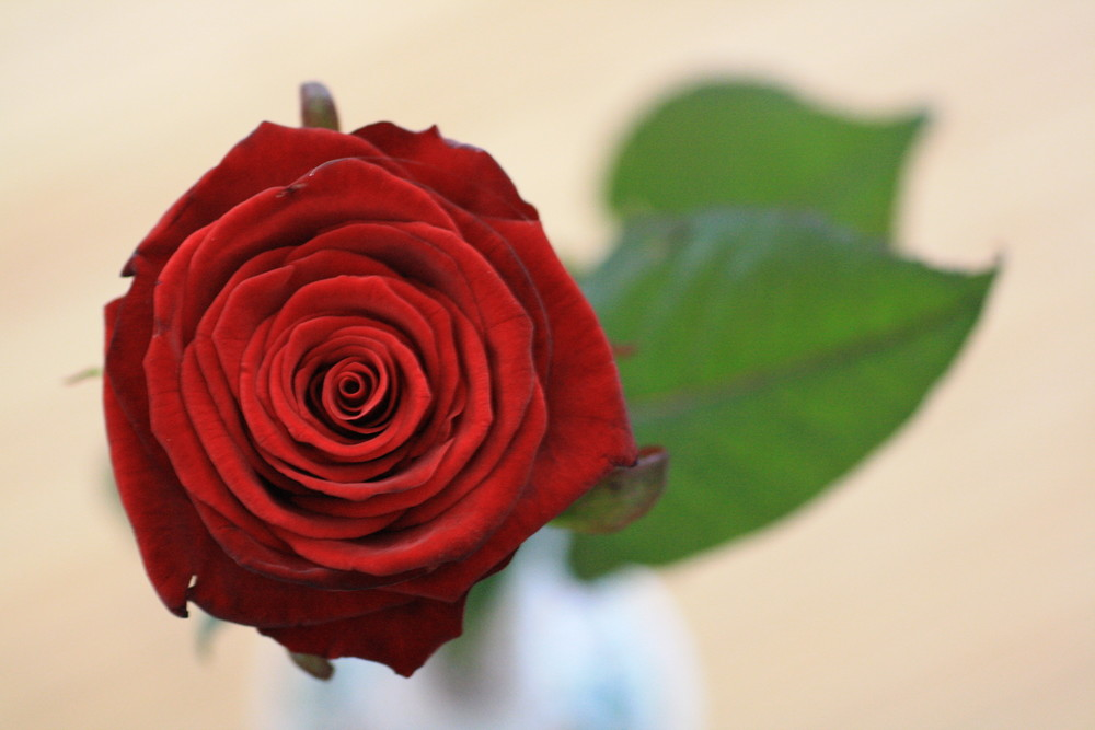 Rot Rot Rot sind die Rosen