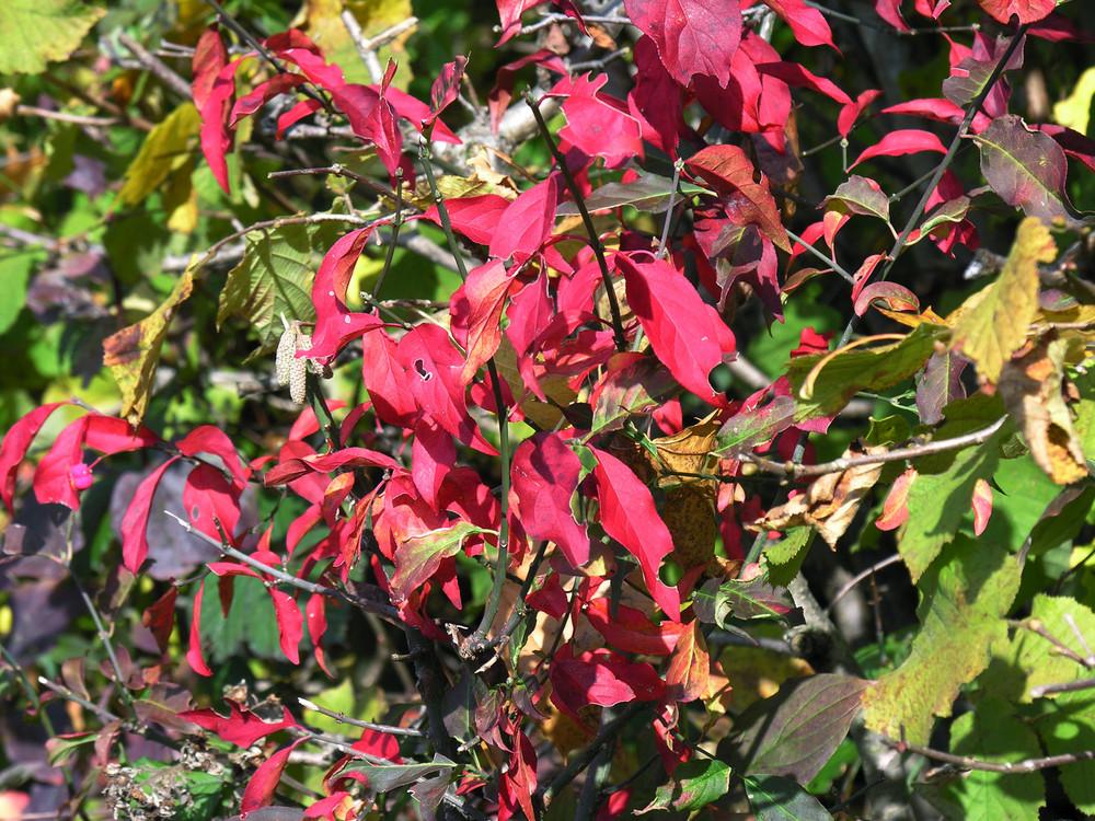Rot strahlt der Herbst