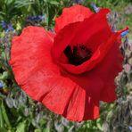 Rot, von Blau begleitet