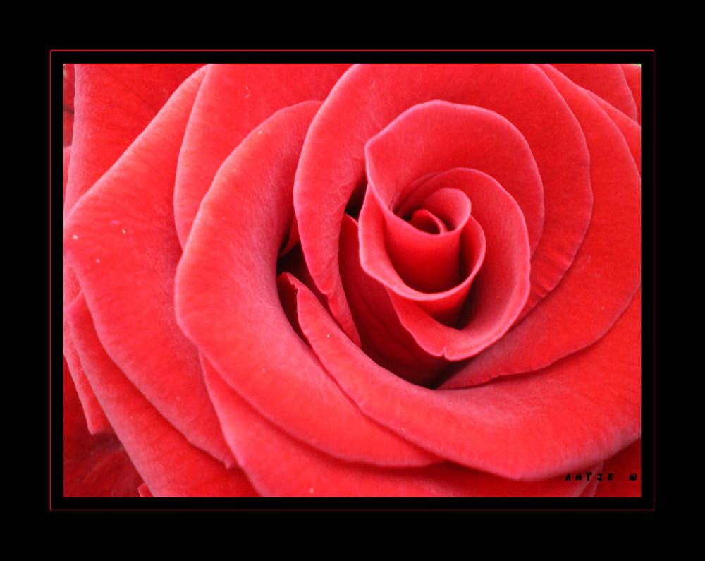 Rot wie die Liebe 2