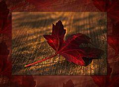 Rote Blätter fallen....