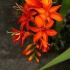 Rote Blüten [ 01 ]
