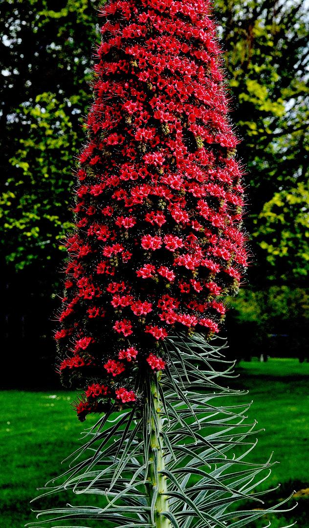 rote bl ten foto bild pflanzen pilze flechten str ucher natur bilder auf fotocommunity. Black Bedroom Furniture Sets. Home Design Ideas