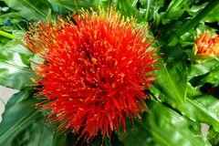 Rote Blütenpracht in der Gruga