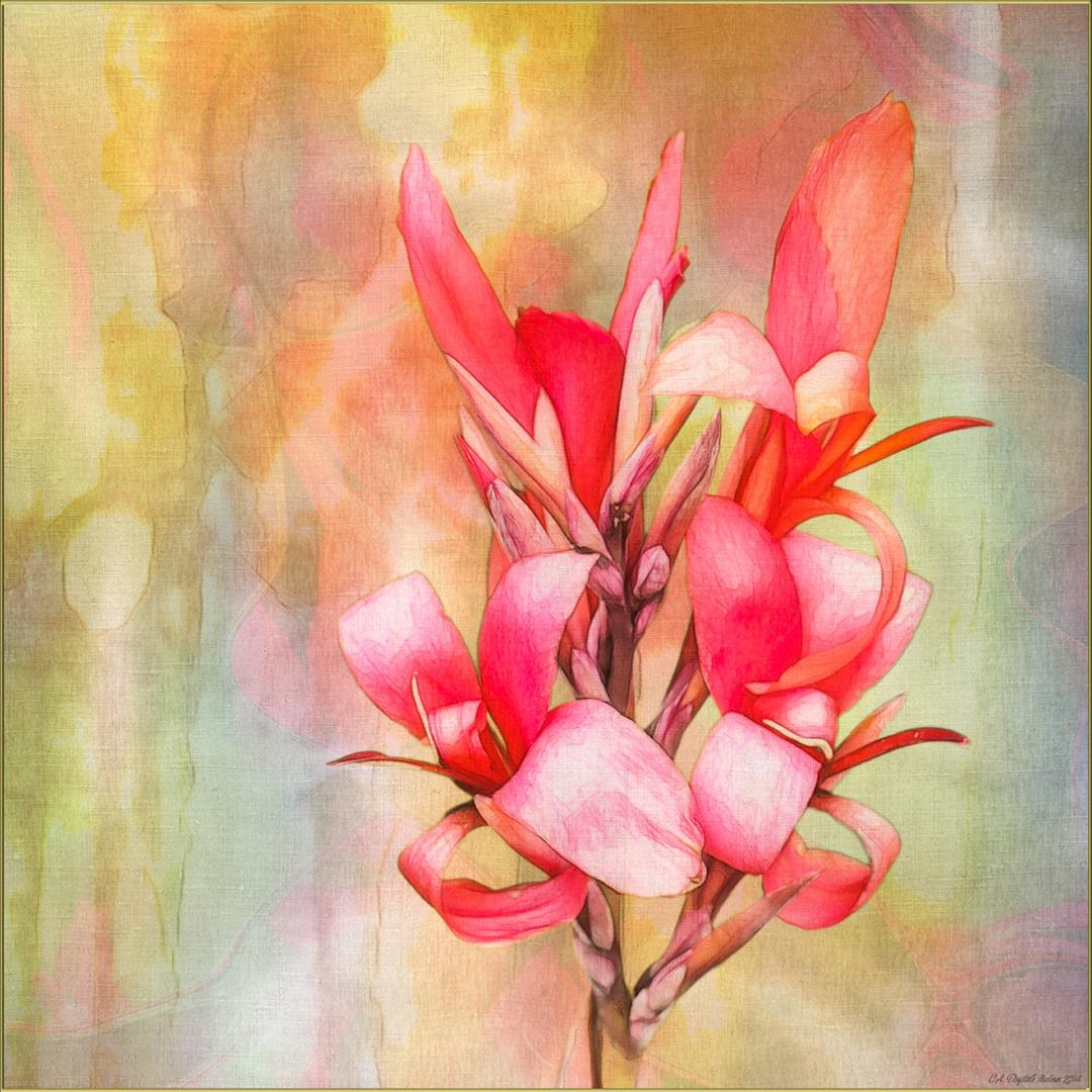 Rote Blume...