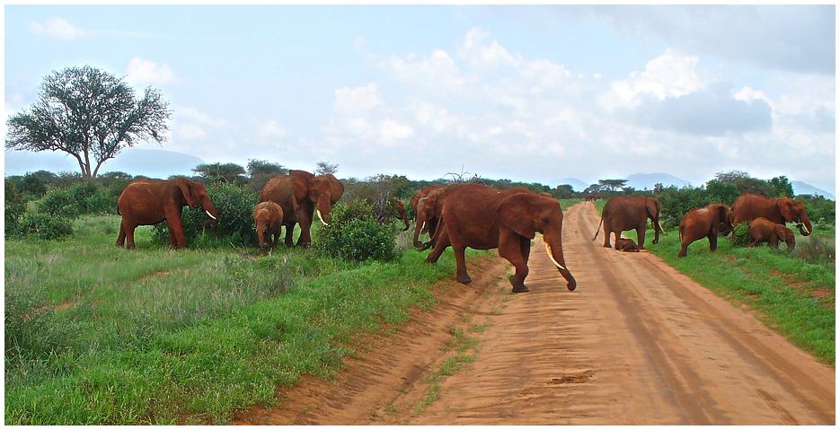 Rote Elefanten