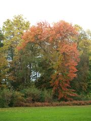 Rote Farbe im Herbst